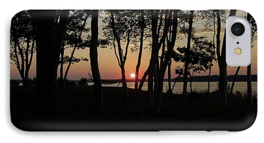 Birch IPhone 7 Case featuring the photograph Birches Watch The Sunset by Faith Harron Boudreau