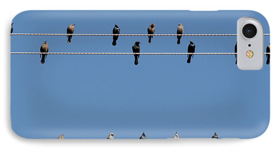 Birds IPhone 7 Case featuring the photograph Bird On A Wire by Christine Till