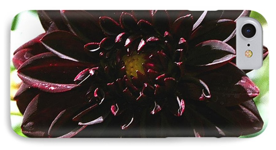 Flower IPhone 7 Case featuring the photograph Black Dalia by Dean Triolo
