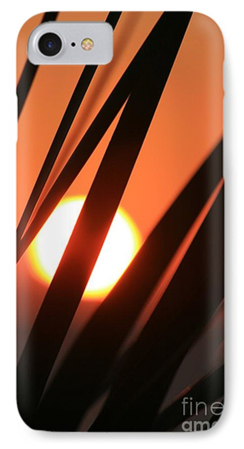 Sun IPhone 7 Case featuring the photograph Blazing Sunset And Grasses by Nadine Rippelmeyer