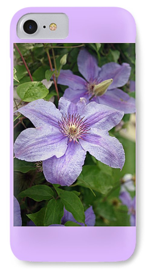 Clematis IPhone 7 Case featuring the photograph Blue Clematis by Margie Wildblood