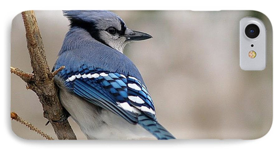Blue Jay IPhone 7 Case featuring the photograph Blue Jay by Gaby Swanson