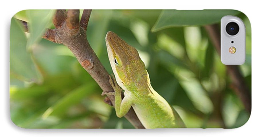 Lizard IPhone 7 Case featuring the photograph Blusing Lizard by Shelley Jones