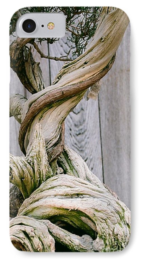 Tree IPhone 7 Case featuring the photograph Bonsai by Dean Triolo