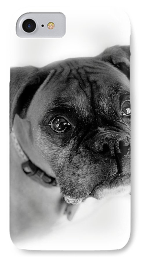 Boxer IPhone 7 Case featuring the photograph Boxer Dog by Marilyn Hunt