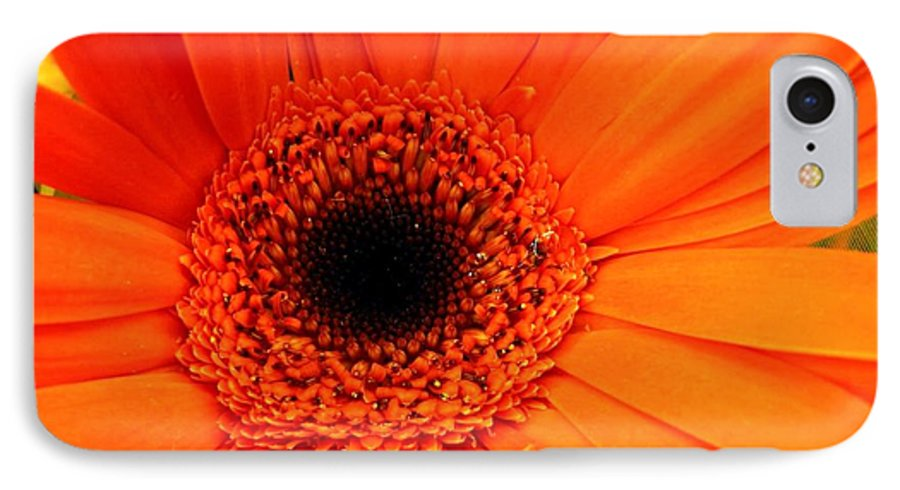 Flower IPhone 7 Case featuring the photograph Bright Red by Rhonda Barrett