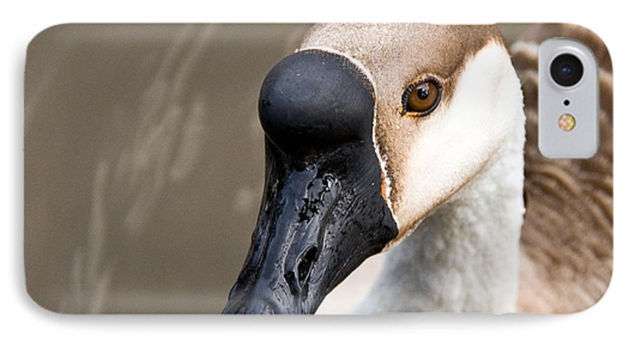 Chinese Brown Goose IPhone 7 Case featuring the photograph Brown Eye by Christopher Holmes