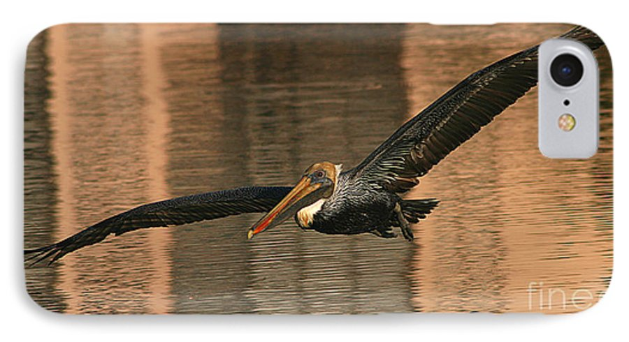 Pelican IPhone 7 Case featuring the photograph Brown Pelican On A Sunset Flyby by Max Allen