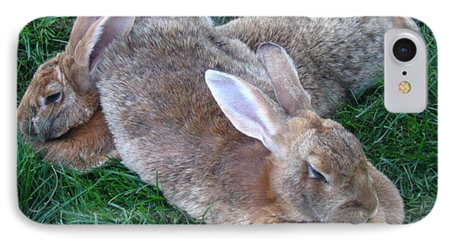 Rabbit IPhone 7 Case featuring the photograph Brown Rabbits by Melissa Parks