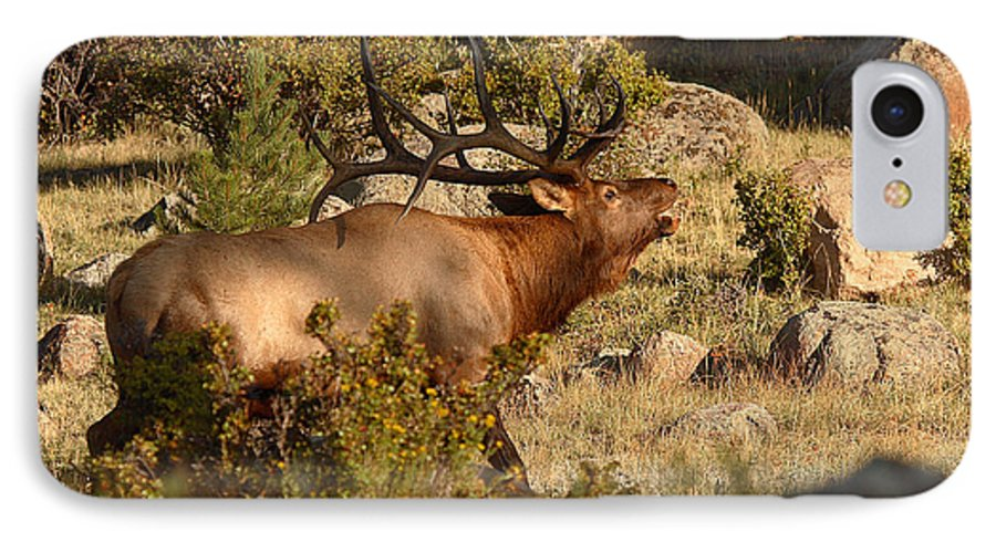 Elk IPhone 7 Case featuring the photograph Bull Elk Bugling Among The Rocks by Max Allen
