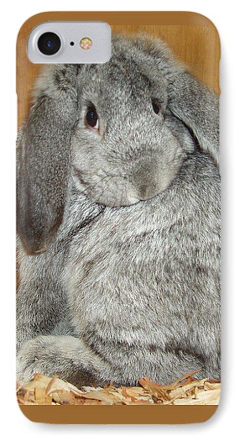 Bunny IPhone 7 Case featuring the photograph Bunny by Gina De Gorna