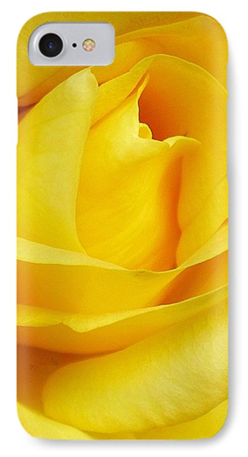 Botanical IPhone 7 Case featuring the photograph Buttercup Rose by Florene Welebny