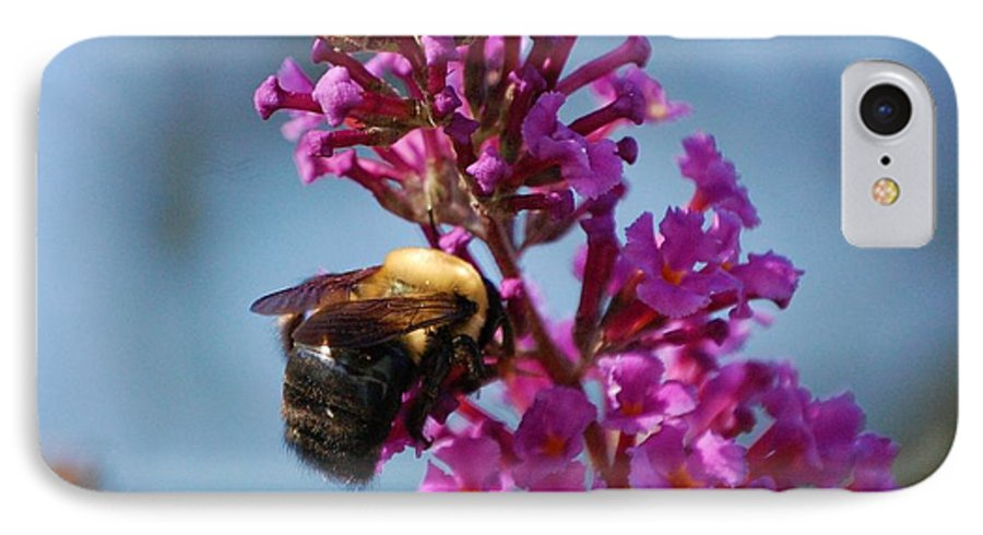 Bee IPhone 7 Case featuring the photograph Buzzed by Debbi Granruth