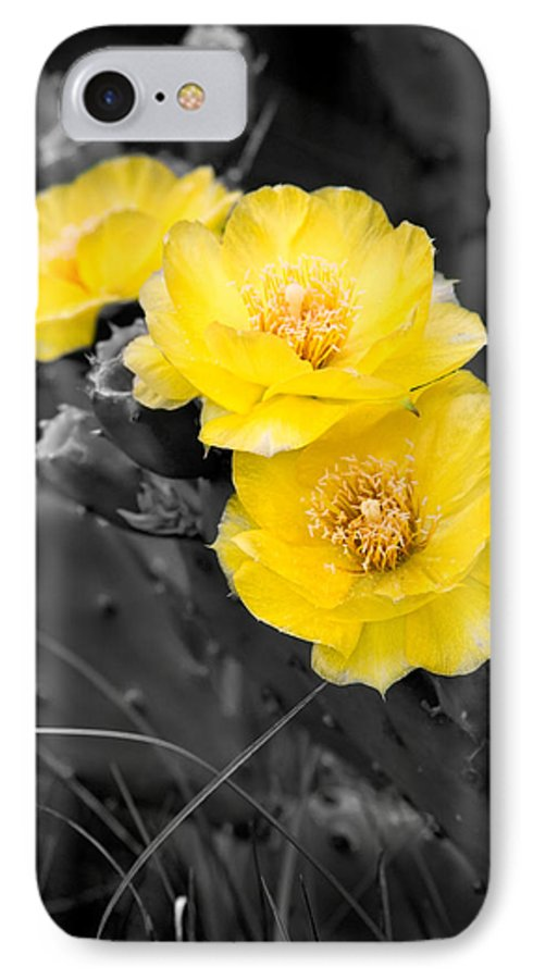 Cactus IPhone 7 Case featuring the photograph Cactus Blossom by Christopher Holmes