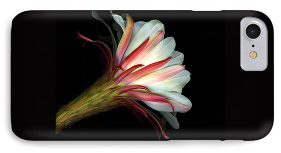 Scanart IPhone 7 Case featuring the photograph Cactus Flower by Christian Slanec