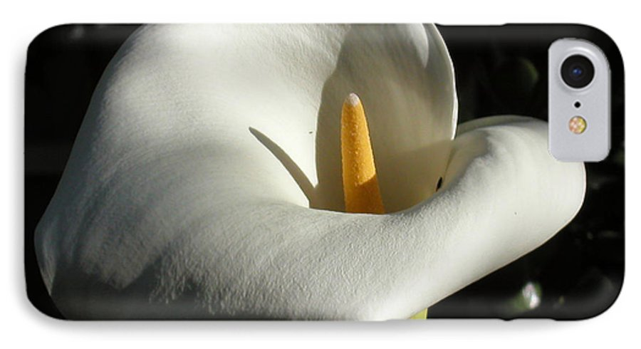 Flowers IPhone 7 Case featuring the photograph Calla Lily-santa Monica - 2005 by Ann Tracy
