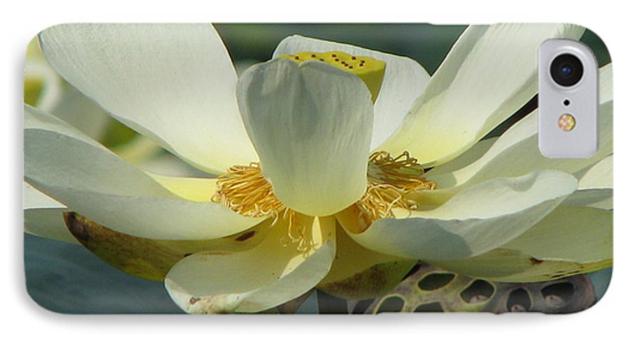Lotus IPhone 7 Case featuring the photograph Calm by Amanda Barcon
