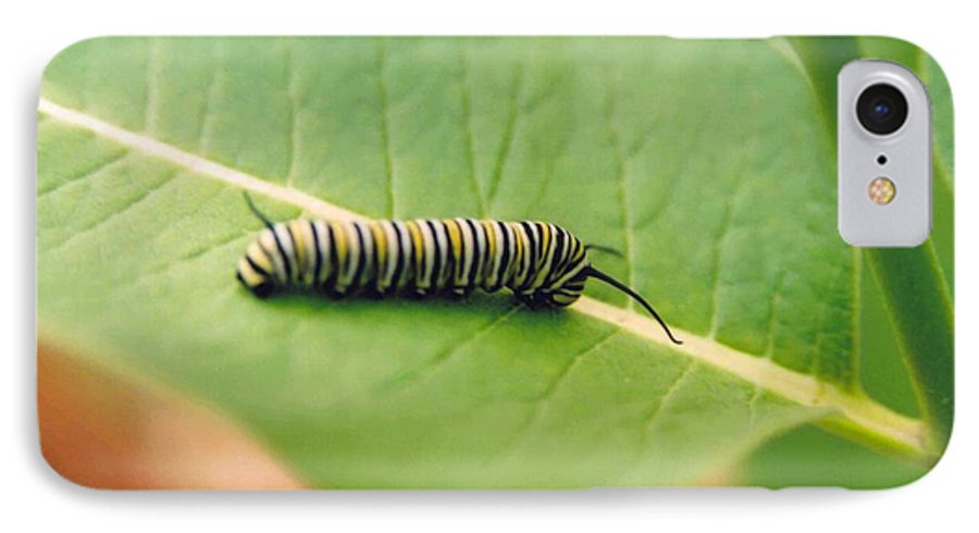 Caterpillar IPhone 7 Case featuring the photograph Caterpillar by Kathy Schumann