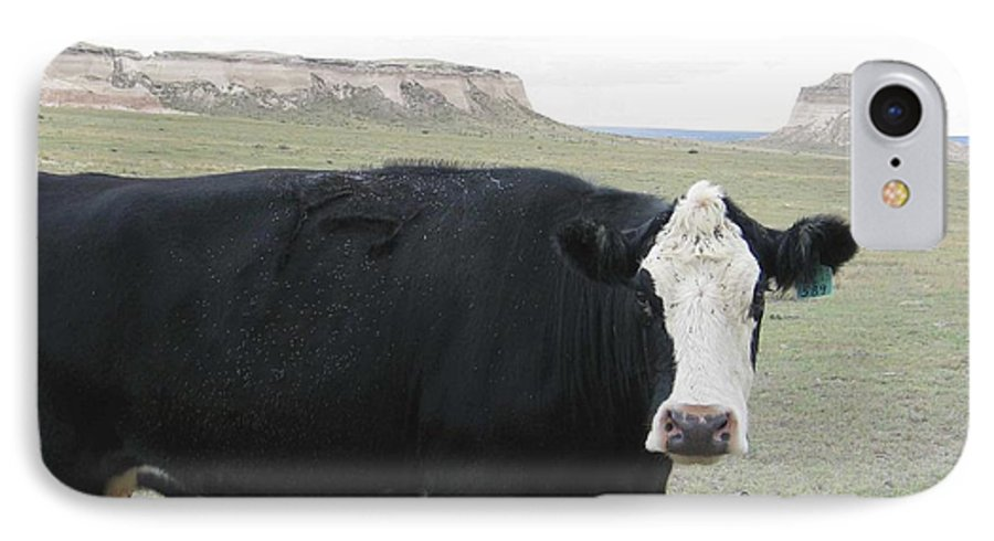 Rural IPhone 7 Case featuring the photograph cattle at Pawnee Butte Colorado by Margaret Fortunato
