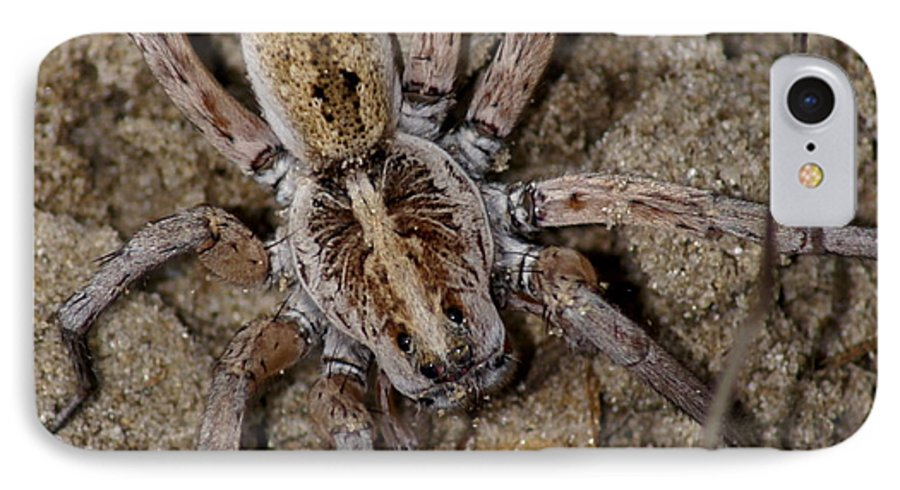 Spider IPhone 7 Case featuring the photograph Charlotte by Debbie May