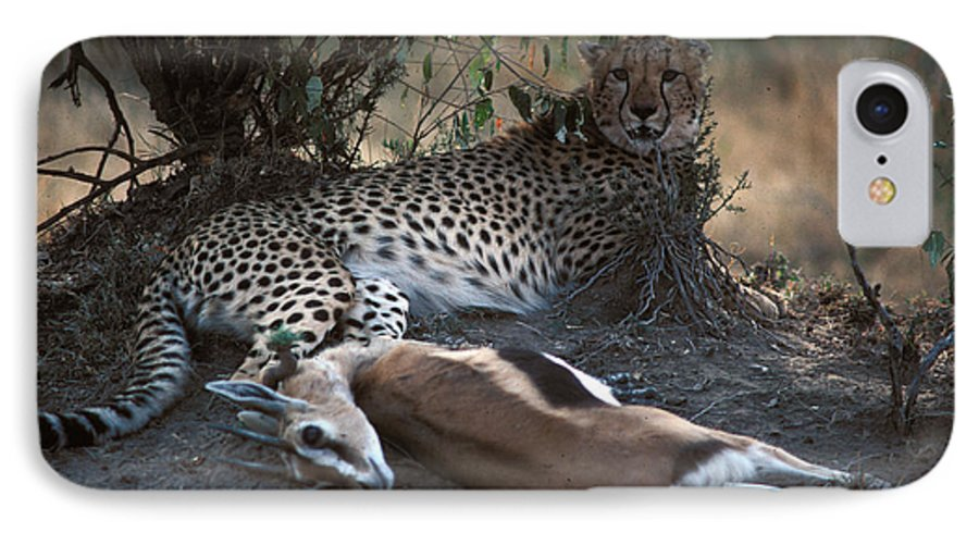 Spots IPhone 7 Case featuring the photograph Cheetah With Kill by Carl Purcell