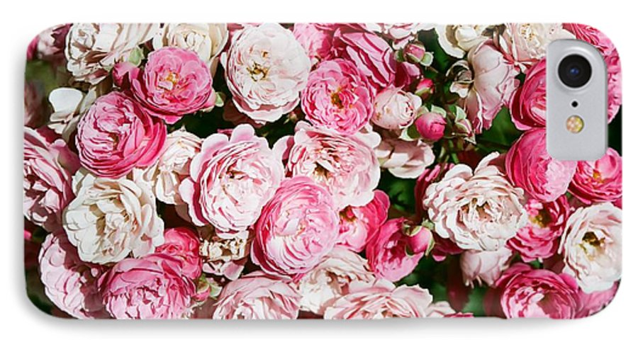 Rose IPhone 7 Case featuring the photograph Cluster Of Roses by Dean Triolo