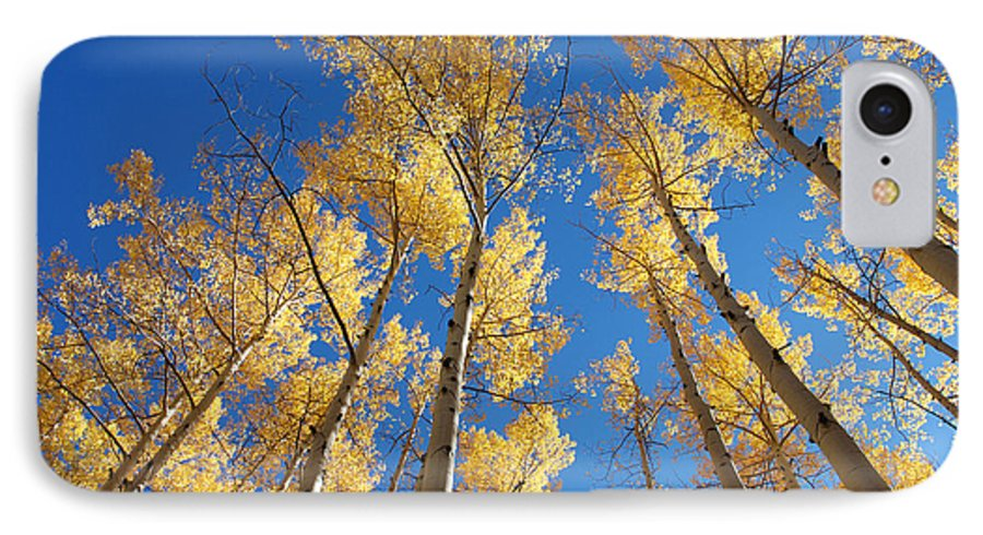 Aspen IPhone 7 Case featuring the photograph Colorado Aspen by Jerry McElroy