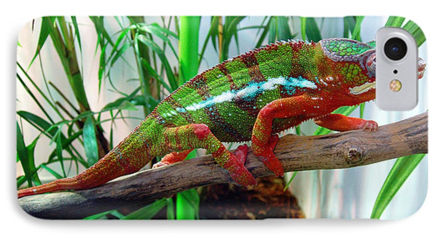 Chameleon IPhone 7 Case featuring the photograph Colorful Chameleon by Nancy Mueller