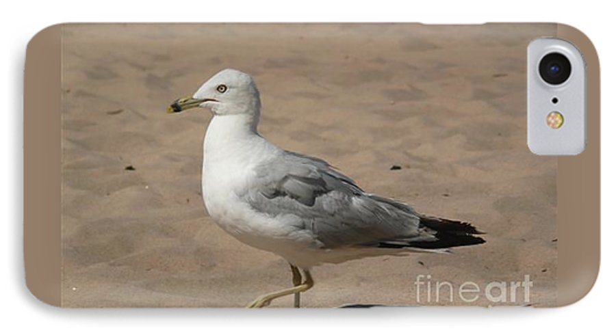 Bird IPhone 7 Case featuring the photograph Come On Take The Picture Already by Barb Montanye Meseroll
