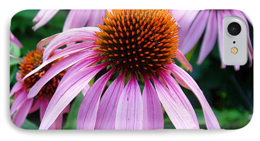 Coneflowers IPhone 7 Case featuring the photograph Three Coneflowers by Nancy Mueller