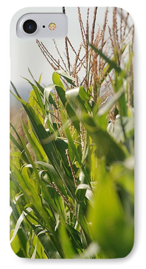 Corn IPhone 7 Case featuring the photograph Corn Country by Margaret Fortunato
