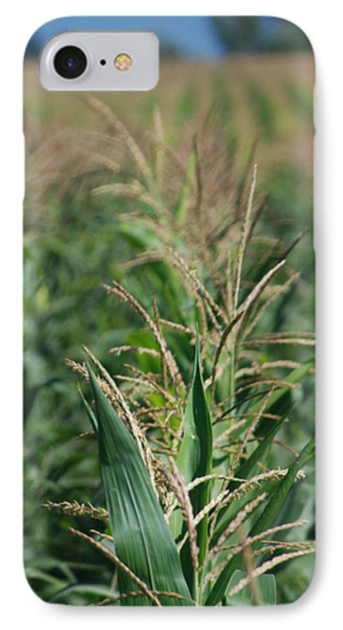 Country IPhone 7 Case featuring the photograph Corn Rows by Margaret Fortunato