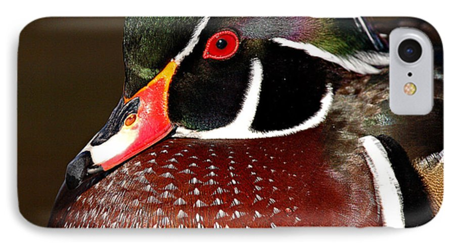 Duck IPhone 7 Case featuring the photograph Courtship Colors Of A Wood Duck Drake by Max Allen