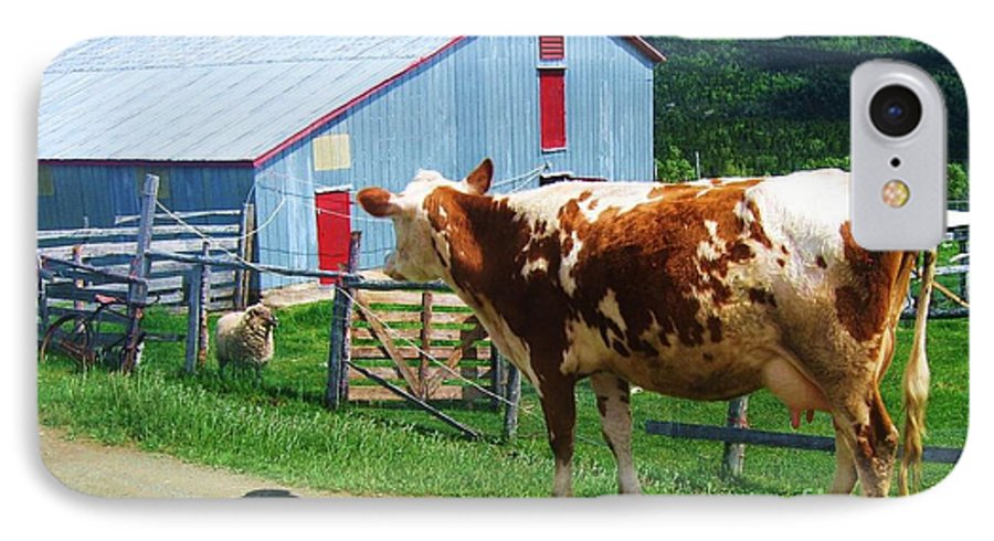 Photograph Cow Sheep Barn Field Newfoundland IPhone 7 Case featuring the photograph Cow Sheep And Bicycle by Seon-Jeong Kim