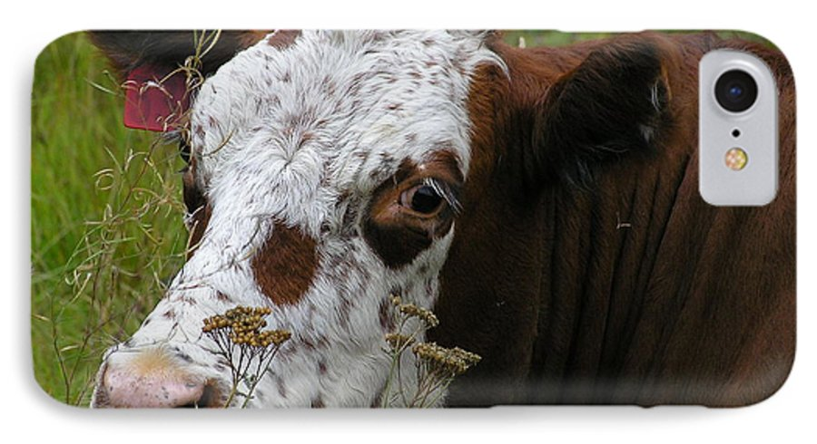 Tongue IPhone 7 Case featuring the photograph Cow Tongue by Louise Magno