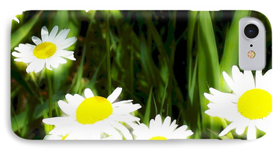 Daisies IPhone 7 Case featuring the photograph Daisy Dream by Idaho Scenic Images Linda Lantzy