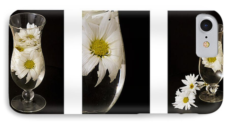 Flowers IPhone 7 Case featuring the photograph Daisy Triptych by Ayesha Lakes