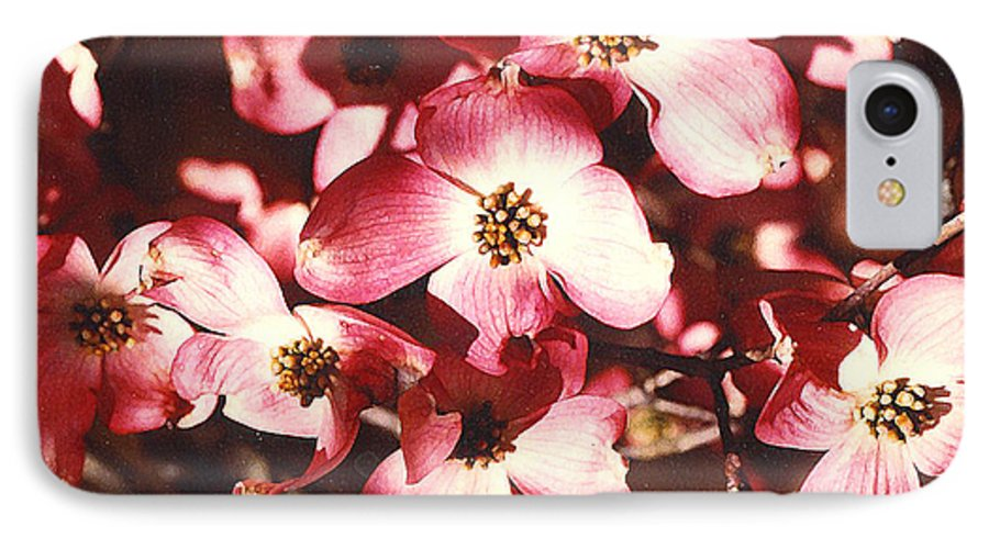 Dogwood IPhone 7 Case featuring the photograph Dogwood Harmony by Nancy Mueller