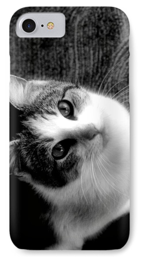 Cat IPhone 7 Case featuring the photograph Don't Ever Leave by Gaby Swanson