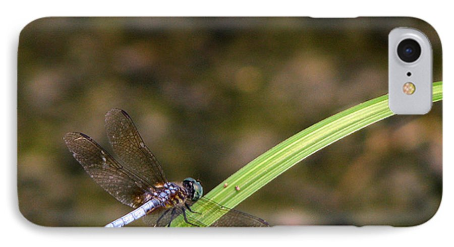 Dragonfly IPhone 7 Case featuring the photograph Dragonfly by Amanda Barcon