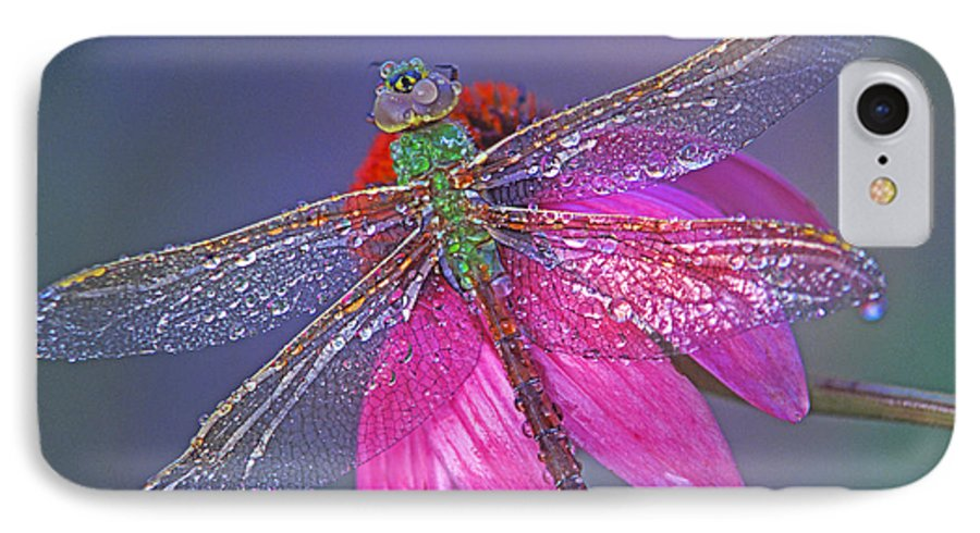 Dew Covered Dragonfly Rests On Purple Cone Flower IPhone 7 Case featuring the photograph Dreaming Dragon by Bill Morgenstern