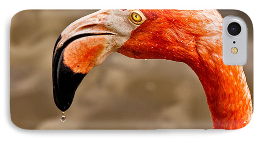 Flamingo IPhone 7 Case featuring the photograph Dripping Flamingo by Christopher Holmes