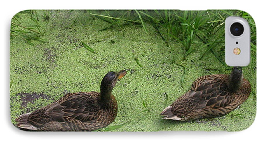 Duck IPhone 7 Case featuring the photograph Ducks In Pond by Melissa Parks
