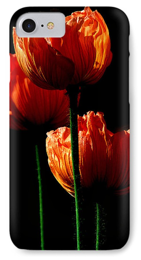 Photograph IPhone 7 Case featuring the photograph Elegance by Stephie Butler