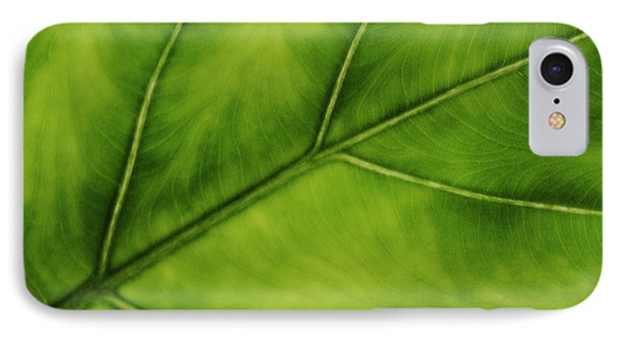 Leaf IPhone 7 Case featuring the photograph Elephant Ear by Marilyn Hunt