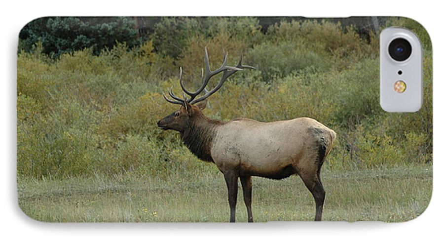 Elk IPhone 7 Case featuring the photograph Elk by Kathy Schumann