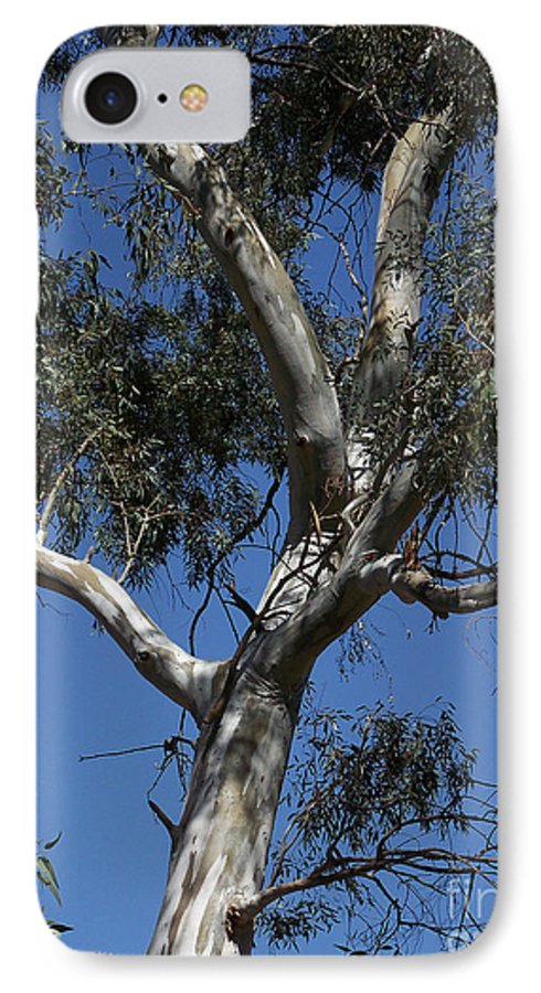Trees IPhone 7 Case featuring the photograph Eucalyptus by Kathy McClure