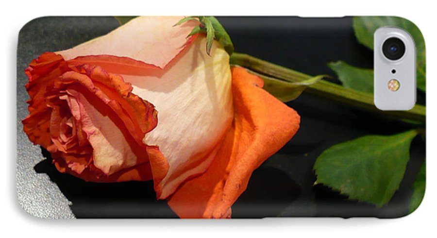 Botanical IPhone 7 Case featuring the photograph Fading Rose by Florene Welebny