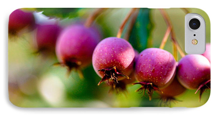 Berry IPhone 7 Case featuring the photograph Fall Berries by Marilyn Hunt