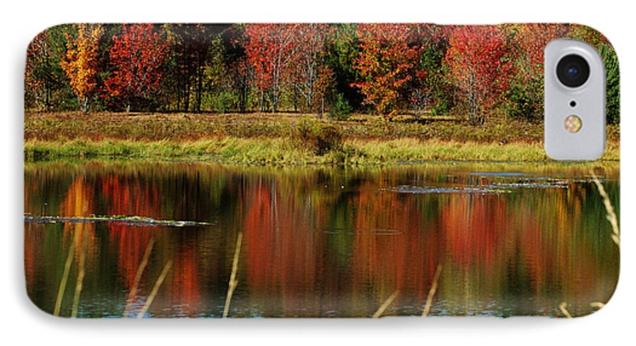 Autumn IPhone 7 Case featuring the photograph Fall Splendor by Linda Murphy